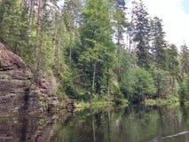 Foresta e lago fotografie stock libere da diritti