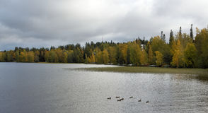 Foresta e lago d'autunno Fotografia Stock