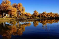 Foresta e lago di diversifolia di populus fotografia stock
