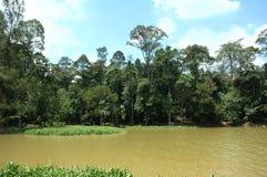 Foresta e lago tropicali Fotografia Stock Libera da Diritti