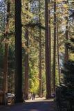 Foresta e legno in parco nazionale di Yosemite negli Stati Uniti Fotografia Stock Libera da Diritti