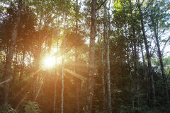 Foresta e luce solare Immagini Stock Libere da Diritti