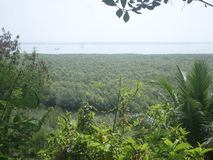 Foresta e mare della mangrovia dalla montagna Immagini Stock