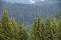 Foresta e montagna Fotografia Stock