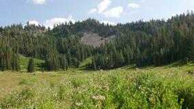 Foresta e montagna del prato al parco nazionale vulcanico di Lassen archivi video