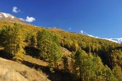 Foresta e montagne nella caduta Fotografia Stock