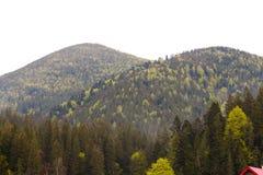 Foresta e montagne verdi conifere Fotografie Stock