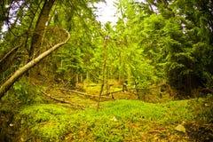 Foresta e muschio immagini stock libere da diritti