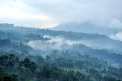 Foresta e nebbia di mattina Immagini Stock Libere da Diritti