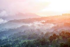 Foresta e nebbia di mattina Fotografia Stock