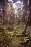 Foresta e nubi Fotografie Stock Libere da Diritti