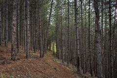 Foresta e percorso in montagne di Rhodope, Bulfaria Fotografia Stock