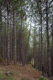Foresta e percorso in montagne di Rhodope, Bulfaria Fotografie Stock Libere da Diritti