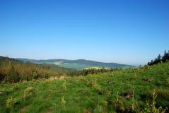 Foresta e prato Immagini Stock Libere da Diritti