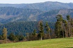 Foresta e prato Fotografia Stock Libera da Diritti