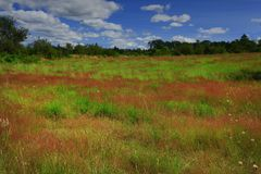 Foresta e prato di nord-ovest pacifici della molla Immagine Stock Libera da Diritti