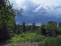 Foresta e prato prima di pioggia fotografia stock