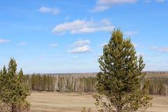 Foresta e radura Fotografia Stock Libera da Diritti