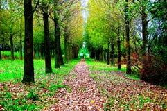 Foresta e strada in autunno Fotografia Stock Libera da Diritti