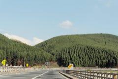 Foresta e strada della collina Immagini Stock