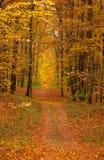 Foresta e strada di autunno Immagini Stock