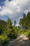 Foresta e strada non asfaltata Fotografia Stock