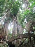 Foresta e tempio immagine stock
