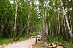 Foresta e vicolo Immagini Stock