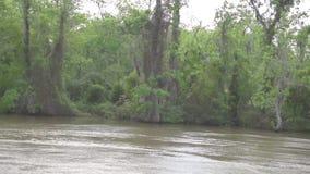Foresta ed albero della giungla di Honey Island Swamp Tour With a New Orleans, Luisiana video d archivio