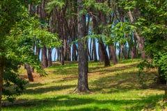 Foresta ed erba immagine stock