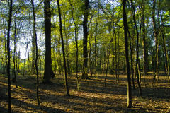 Foresta ed indicatore luminoso Fotografia Stock Libera da Diritti