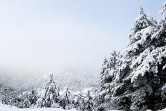 Foresta ed inverno Fotografia Stock