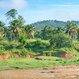 Foresta equatoriale vicino al fiume Fotografia Stock Libera da Diritti