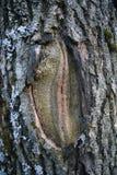 Foresta erotica Fotografia Stock