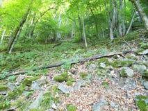 Foresta in estate Il trionfo della natura fotografia stock libera da diritti