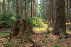 Foresta in Europa media fotografia stock libera da diritti