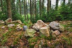 Foresta in Europa media immagine stock