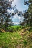 Foresta in Europa media fotografie stock libere da diritti