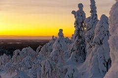 Foresta fantastica Fotografie Stock Libere da Diritti