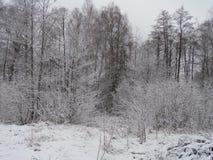 Foresta favolosa di inverno Fotografie Stock