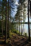 Foresta fertile e verdeggiante e lago in Finlandia Immagini Stock