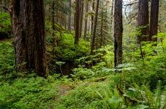 Foresta fertile, parco nazionale olimpico Fotografie Stock Libere da Diritti