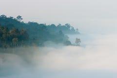 Foresta in foschia Fotografie Stock Libere da Diritti