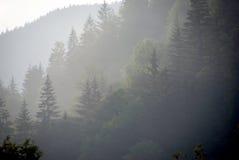 Foresta in foschia immagini stock libere da diritti