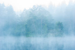 Foresta in foschia Immagine Stock