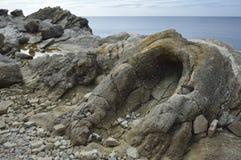 Foresta fossile fotografie stock libere da diritti