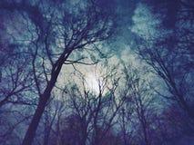 Foresta fotografica di notte di illustraion fotografie stock