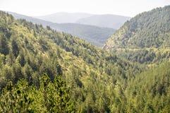 Foresta fra la Serbia e la Bosnia Fotografia Stock