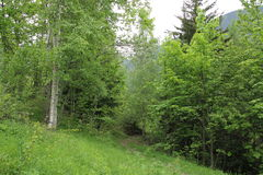 Foresta francese delle alpi Immagine Stock
