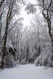 Foresta fredda Fotografia Stock Libera da Diritti